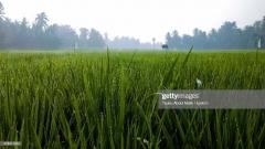 Photo Taken In Indonesia, Lhokseumawe